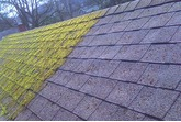 Moss Clear - Roof Moss Remover (Available in 5 & 25 litre)
